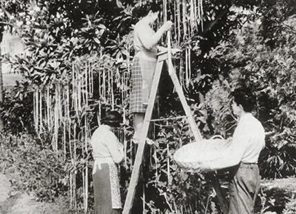 piante di spaghetti - alt