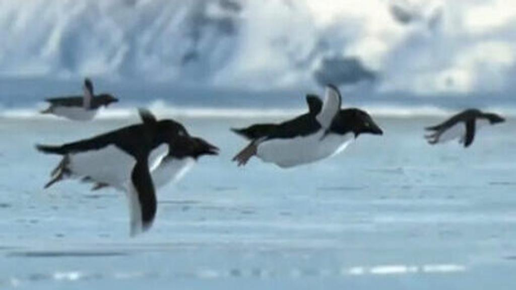 pinguini volanti - alt
